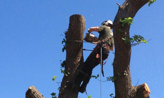 The Premier Tree Surgeon in Surrey